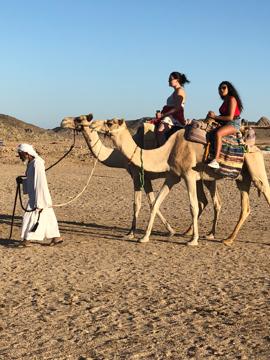 bedawi safari